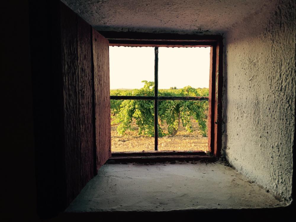 Tierras manchegas viñedos